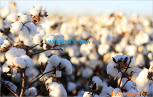 cotton-yarn-india