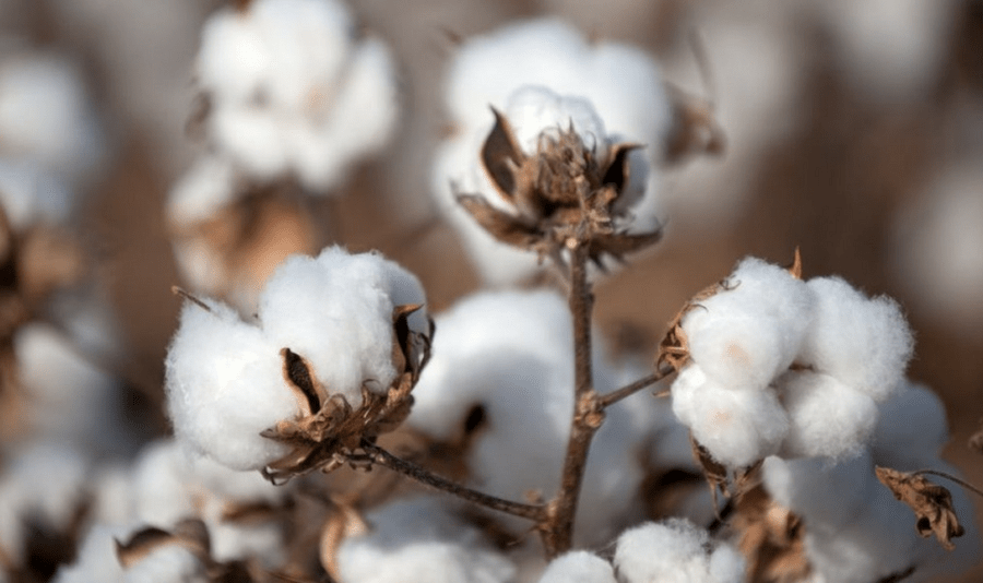 Cotton yarn Export in India